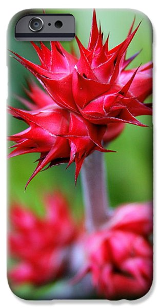Red Tropical Flowers iPhone Case by Karon Melillo DeVega