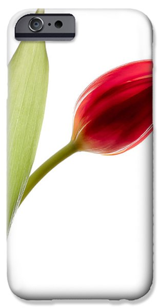Dave iPhone Cases - Red Tulip iPhone Case by Dave Bowman
