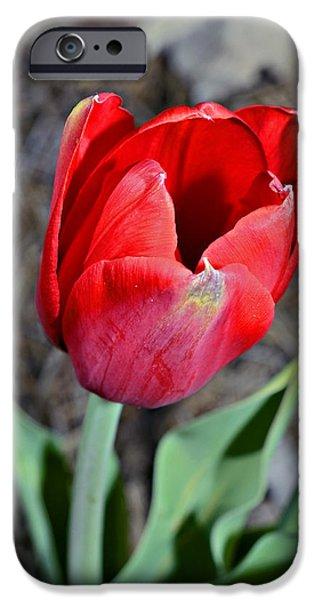 Red Tulip in Garden iPhone Case by Susan Leggett