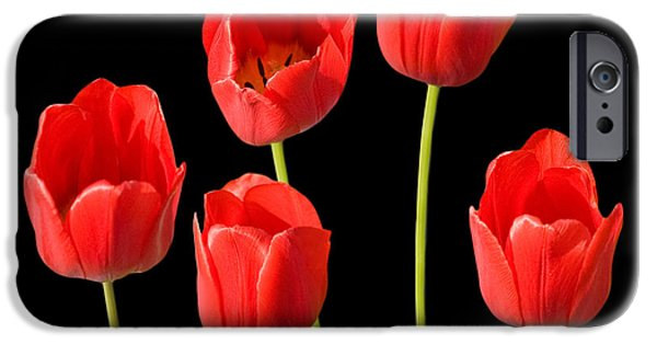 Canvassing iPhone Cases - Red Tulips Black Background iPhone Case by Natalie Kinnear