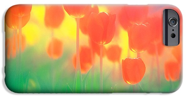 Close Focus Nature Scene iPhone Cases - Red Tulips iPhone Case by Panoramic Images