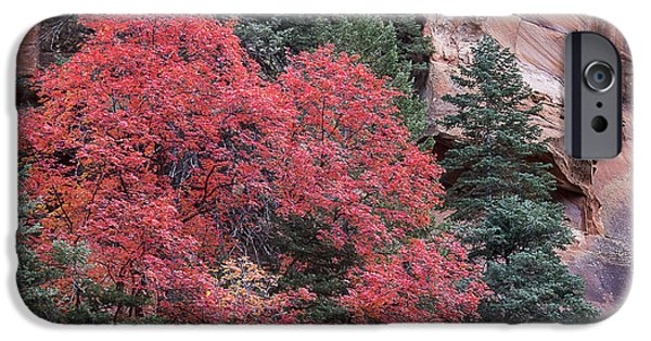 West Fork iPhone Cases - Red-Walled Canyon iPhone Case by Focus On Nature Photography
