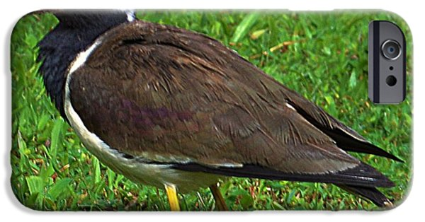 Lapwing iPhone Cases - Red wattled lapwing iPhone Case by Asith Wisidagama