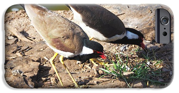 Lapwing iPhone Cases - Red-wattled Lapwing iPhone Case by C H Apperson