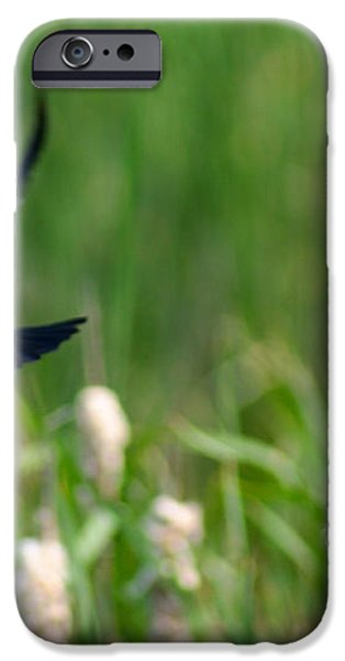 Red Winged Blackbird iPhone Case by Andrew Lahay