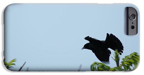 Creative Blackbird iPhone Cases - Red Winged BlackBird in Taking Off iPhone Case by Andrew Lahay