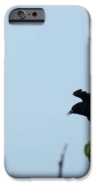 Red Winged BlackBird in Taking Off iPhone Case by Andrew Lahay