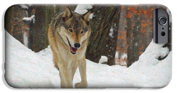 Wolf Pictures iPhone Cases - Red Wolf on a Winter Hunt iPhone Case by Lianne Schneider