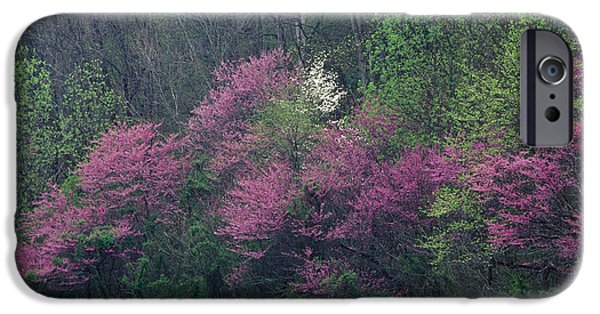Indiana Springs iPhone Cases - Redbud - FM000095 iPhone Case by Daniel Dempster