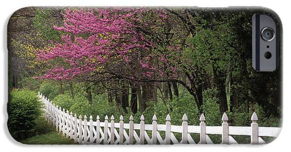 Indiana Springs iPhone Cases - Redbud - FS000814 iPhone Case by Daniel Dempster