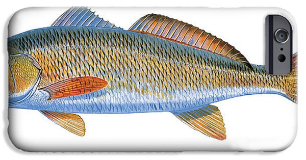 Islamorada iPhone Cases - Redfish iPhone Case by Carey Chen