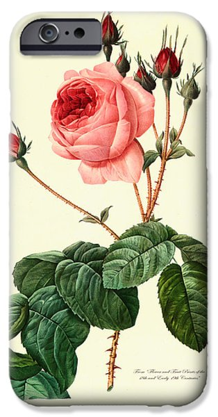 Antiques iPhone Cases - Redoute Rose iPhone Case by Gary Grayson