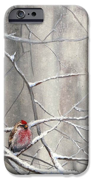 Crossbill iPhone Cases - Redpoll Eyeing The Feeder - 1 iPhone Case by Karen Whitworth