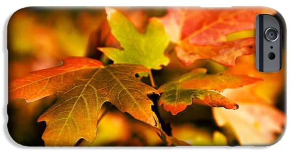 Fall Season iPhone Cases - Reds iPhone Case by Chad Dutson
