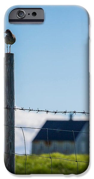 Vertical Flight iPhone Cases - Redshank Tringa Totanus, Flatey Island iPhone Case by Panoramic Images