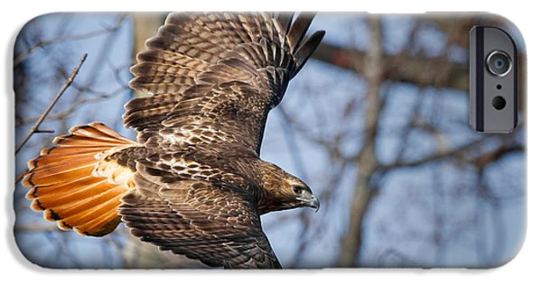 Flight iPhone Cases - Redtail Hawk iPhone Case by Bill  Wakeley
