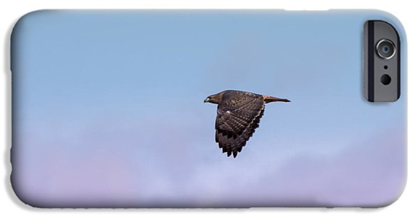Redtail Hawk iPhone Cases - Redtail Hawk Fly By iPhone Case by Ernie Echols