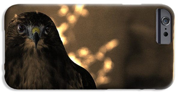 Red Tail Hawk Digital Art iPhone Cases - Redtail iPhone Case by Steven  Digman