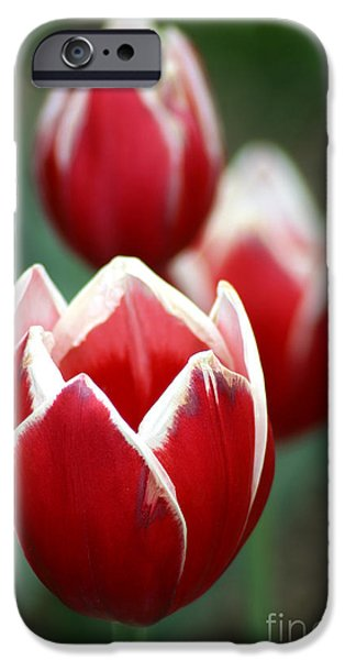 Gary Gingrich iPhone Cases - RedWhiteTulips6838 iPhone Case by Gary Gingrich Galleries