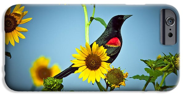 Cabin Window iPhone Cases - Redwing In Sunflowers iPhone Case by Robert Frederick