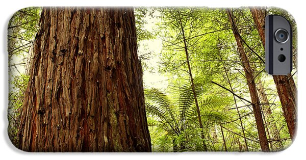 Daytime iPhone Cases - Redwood forest iPhone Case by Les Cunliffe