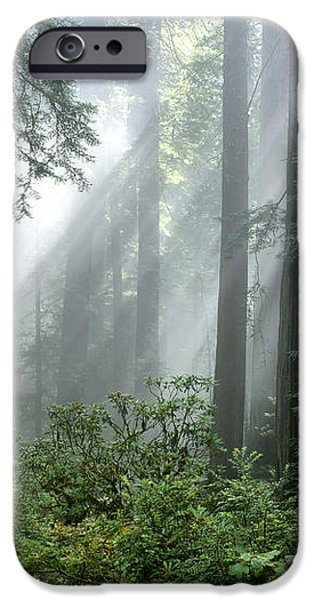 Redwood Forest With Sunbeams iPhone Case by Inga Spence