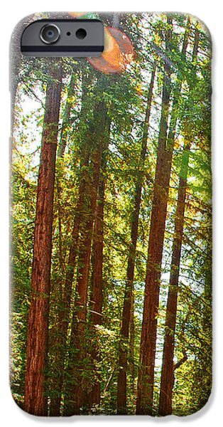 Redwood Wall Mural Panel 1 iPhone Case by Artist and Photographer Laura Wrede