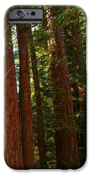 Redwood Wall Mural Panel Three iPhone Case by Artist and Photographer Laura Wrede