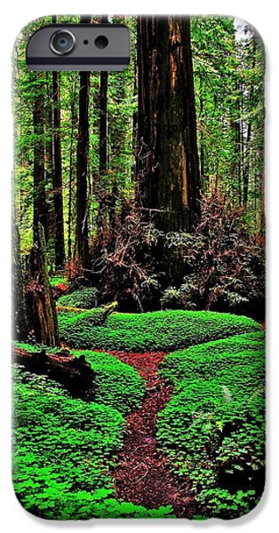 Best Sellers -  - Alice In Wonderland iPhone Cases - Redwoods Wonderland iPhone Case by Benjamin Yeager