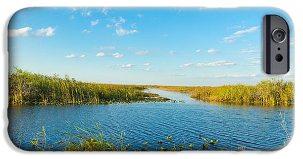 National Preserves iPhone Cases - Reed At Riverside, Big Cypress Swamp iPhone Case by Panoramic Images