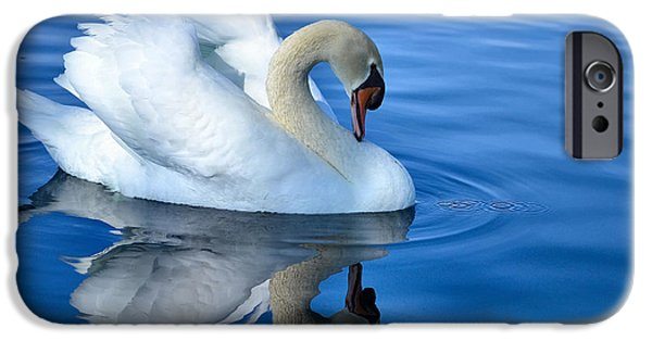 Swans... iPhone Cases - Reflecting iPhone Case by Deb Halloran