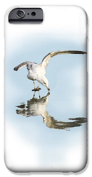 Seagull iPhone Cases - Reflection in Ice iPhone Case by Betty LaRue