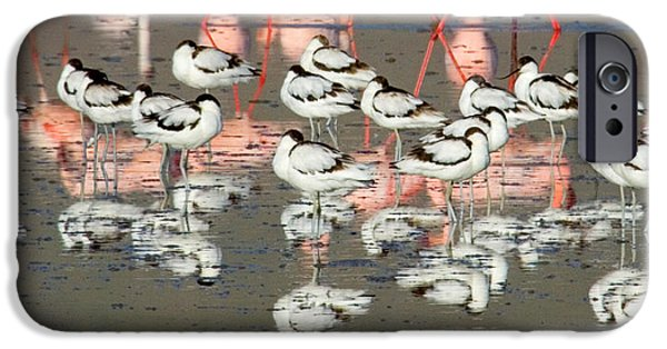 Flocks Of Birds iPhone Cases - Reflection Of Avocets And Flamingos iPhone Case by Panoramic Images