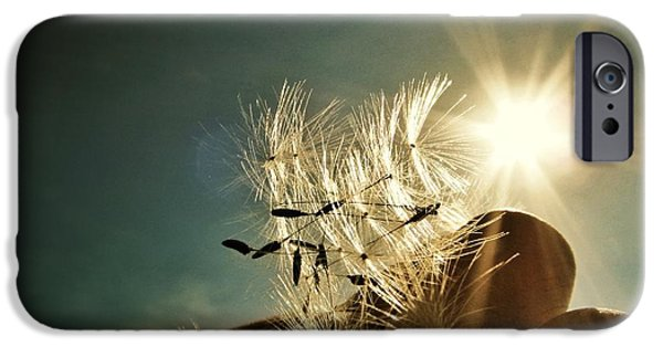 Reflections Of Nature iPhone Cases - Reflection of the Sun iPhone Case by Marianna Mills