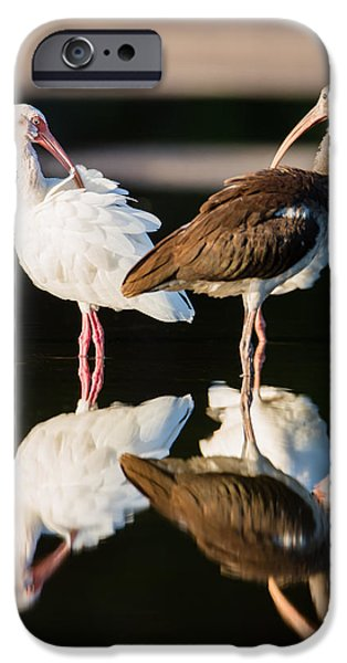 Ornithology iPhone Cases - Reflection of Two Young Ibis iPhone Case by Andres Leon