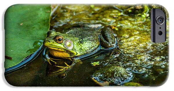 Matting iPhone Cases - Reflections of a Bullfrog iPhone Case by Optical Playground By MP Ray