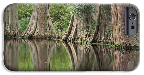 Trees Reflecting In Water iPhone Cases - Reflections Of Cypress Trees iPhone Case by Art Wolfe