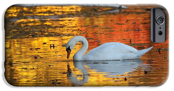 Sudbury Ma iPhone Cases - Reflections on Golden Pond iPhone Case by Jayne Carney