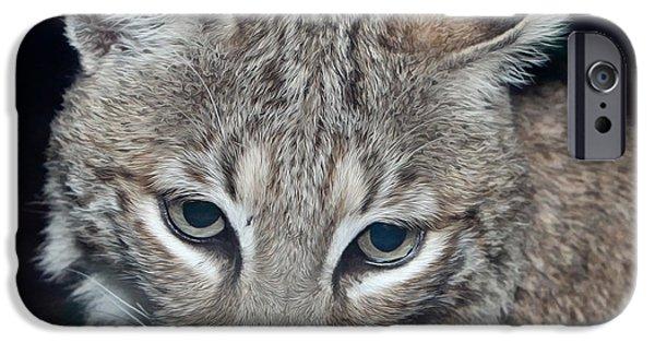 Nature Center Paintings iPhone Cases - Reflective Bobcat iPhone Case by John Haldane