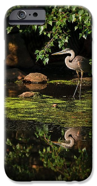 Concord Massachusetts iPhone Cases - Reflective Heron iPhone Case by Sylvia J Zarco