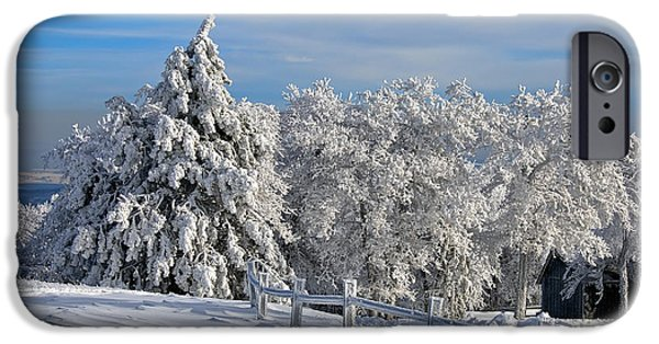 Trees In Snow iPhone Cases - Refresh iPhone Case by Lois Bryan