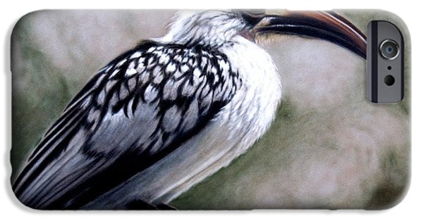 Office Pastels iPhone Cases - Regal Hornbill iPhone Case by Carol McCarty