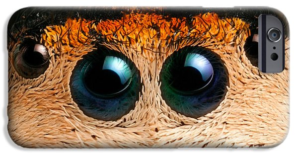 Jumping Spiders iPhone Cases - Regal Jumping Spider Eyes iPhone Case by Scott Linstead