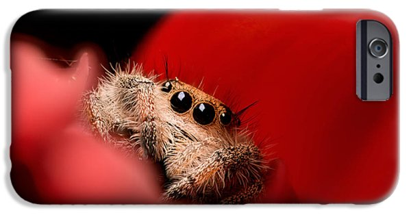 Jumping Spiders iPhone Cases - Regal Jumping Spider In Flower iPhone Case by Scott Linstead
