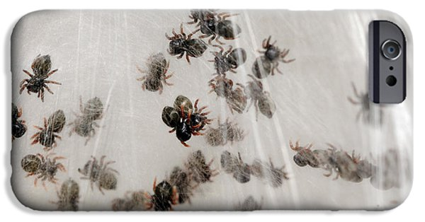 Jumping Spiders iPhone Cases - Regal Jumping Spiderlings iPhone Case by Scott Linstead