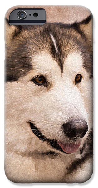 Sled Dog iPhone Cases - Regal Malamute iPhone Case by Karen Zucal Varnas