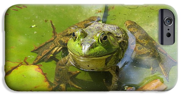 Fauna iPhone Cases - Relaxing on a Lily Pad  iPhone Case by Tom Gari Gallery-Three-Photography