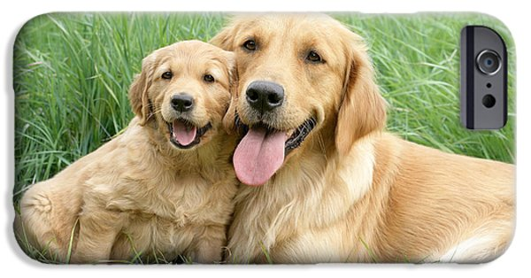 Dog Photography iPhone Cases - Relaxing Retrievers iPhone Case by Greg Cuddiford