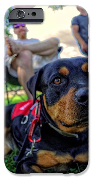Rottweiler iPhone Cases - Relaxing Rottie iPhone Case by Greg Mimbs
