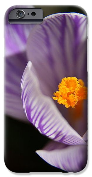 Remembrance iPhone Case by Neal  Eslinger